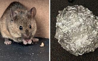 Với thứ mà gia đình nào cũng có trong bếp này, nhà bạn sẽ không còn 1 con chuột nào