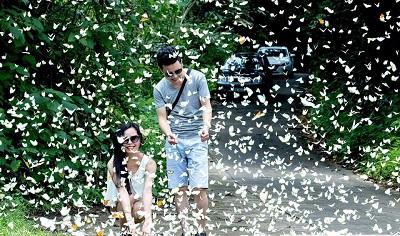 Đẹp lịm tim với rừng Cúc Phương vào mùa bươm bướm