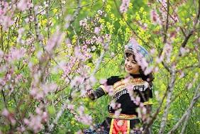 Cận cảnh thiên đường hoa nở trong mây ở Fansipan